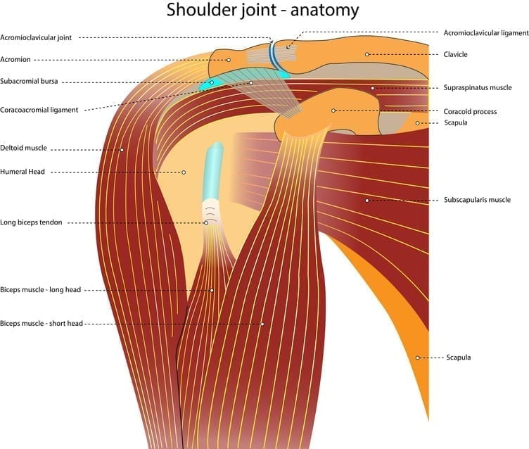 Effect Of Sternoclavicular Joint Mobilization On Pain And Function